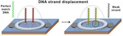 DNA displacement image