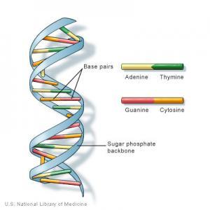 DNA strand photo