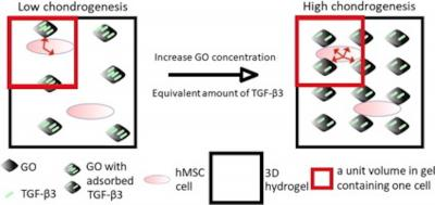 Schematic for GO-assisted chondrogenesis image