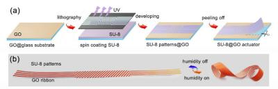 Chinese team develops graphene and GO actuators image