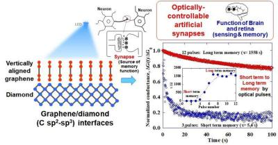 Schematics of optoelectronic synaptic functions of vertically aligned graphene/diamond junctions image