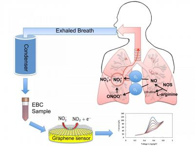 Rutgers team's graphene sensor to diagnose asthma image