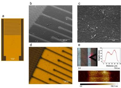 Researchers are using aerosol-jet-printing technology to create graphene biosensors that can detect histamine image