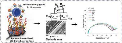 Laser-induced graphene interdigitated electrodes for label-free aptamer-based biosensors image