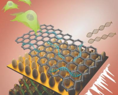 Biosensor consists of an array of ultrathin graphene layers and gold structures image