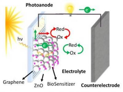 UCR team creates graphene-enhanced biophotovoltaic technology image