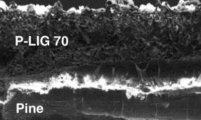 Cross-section of Rice U's graphene on wood image