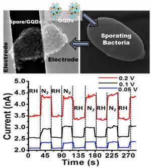 graphene-Quantum-dots-bacteria-sensor-image