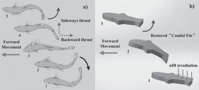 Graphene-based microfish image