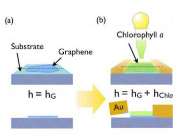 Coating Graphene With Chlorophyll Enables A Light