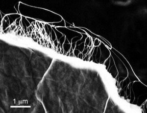 Graphene CNT supercapacitor at Rice image