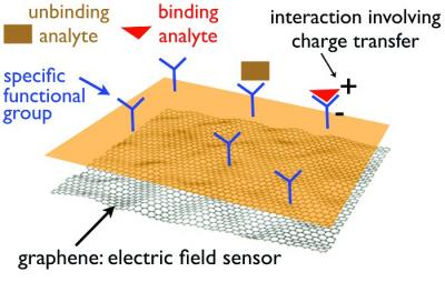 Graphene-based chemical sensor photo