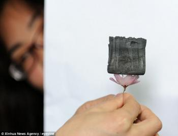 Graphene aerogel on cherry blossom photo