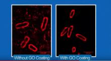 University of Manchester researcher develops GO coating that makes living cells and tissues more visible