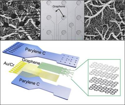 Thin graphene neural electrical/optical sensors images